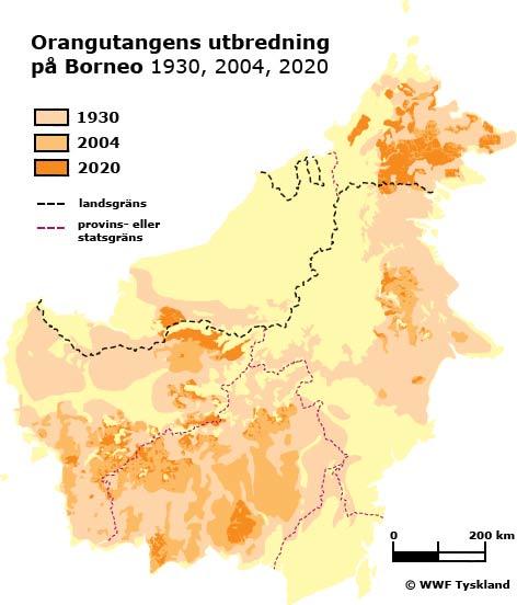 Orangutangens utbredning på Borneo