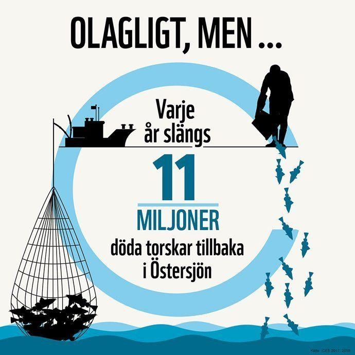 Illegala utkast av torsk