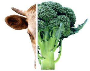 Broccoli och kossa