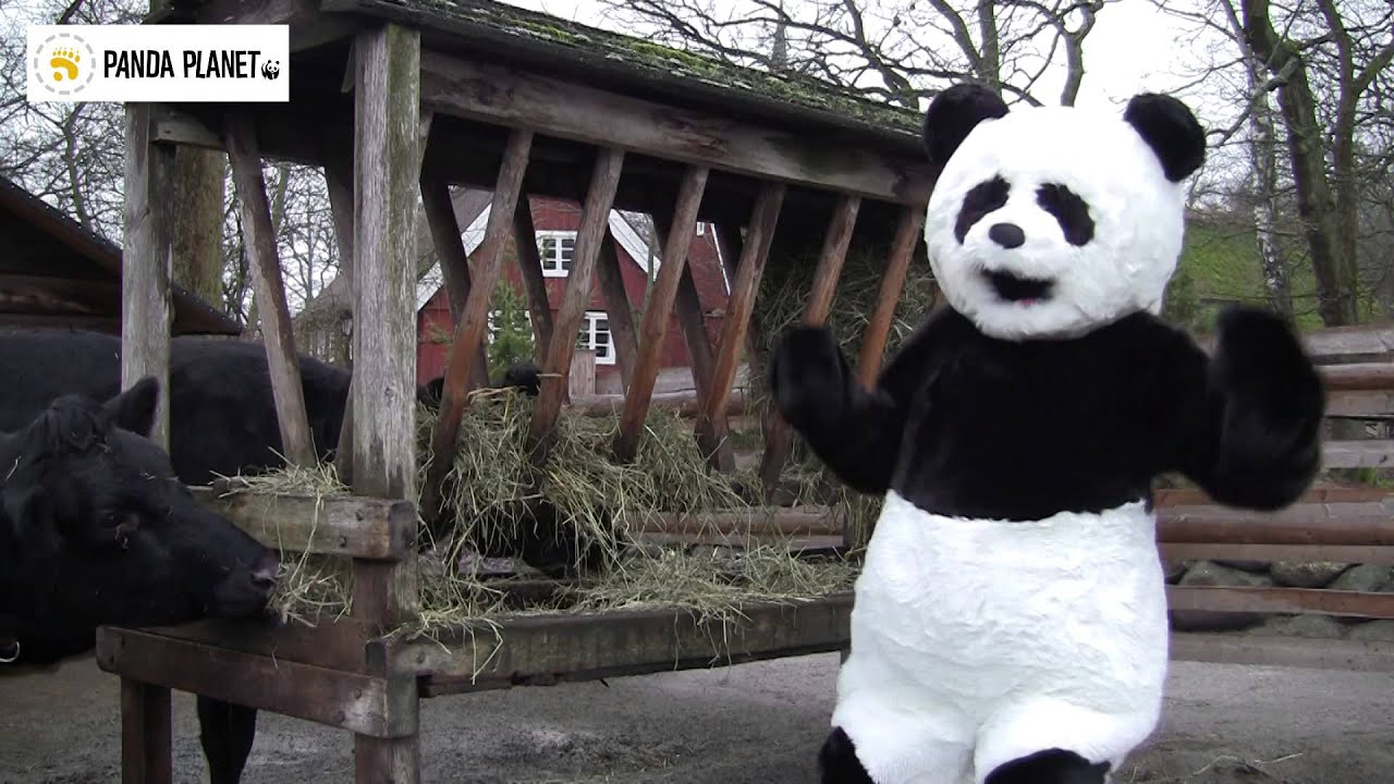 Pandafilmen om biffen