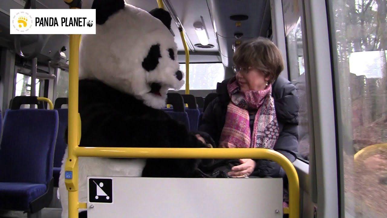 Pandafilmen om bilen