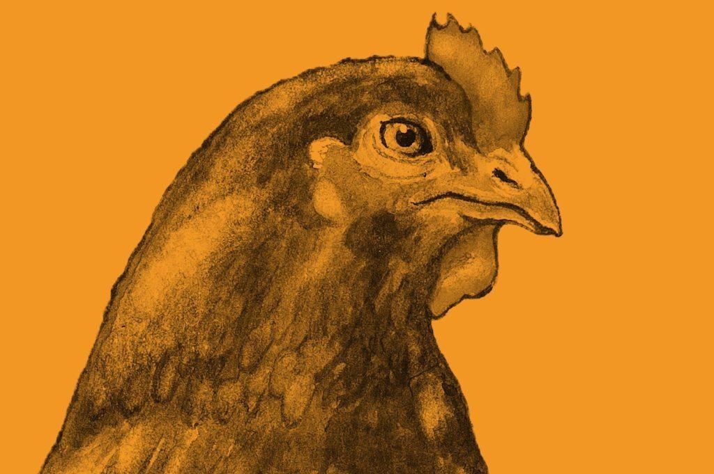 unga svarta kycklingar sexe gay svart