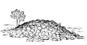 Odlingsröse
