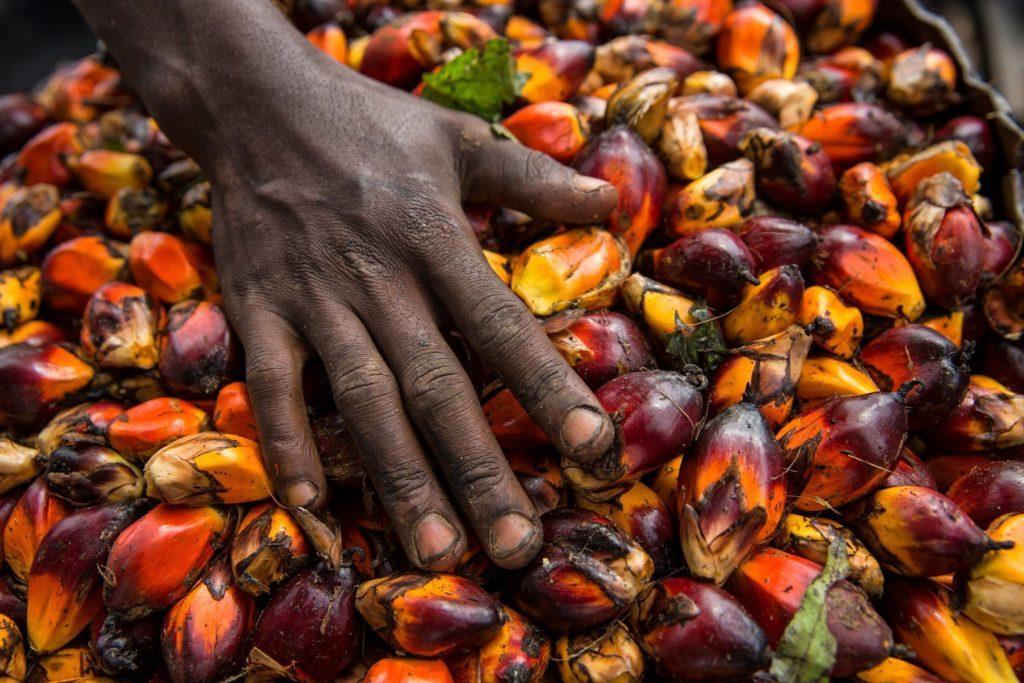 fakta om palmolja