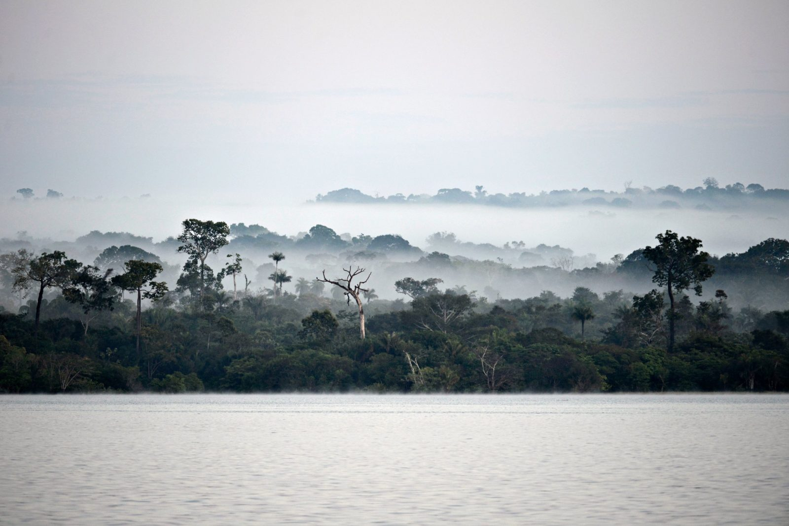 Molnig regnskog vid vatten, Rio Tapajos Brasilien