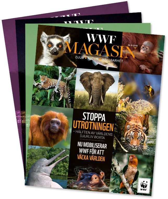 WWF magasin