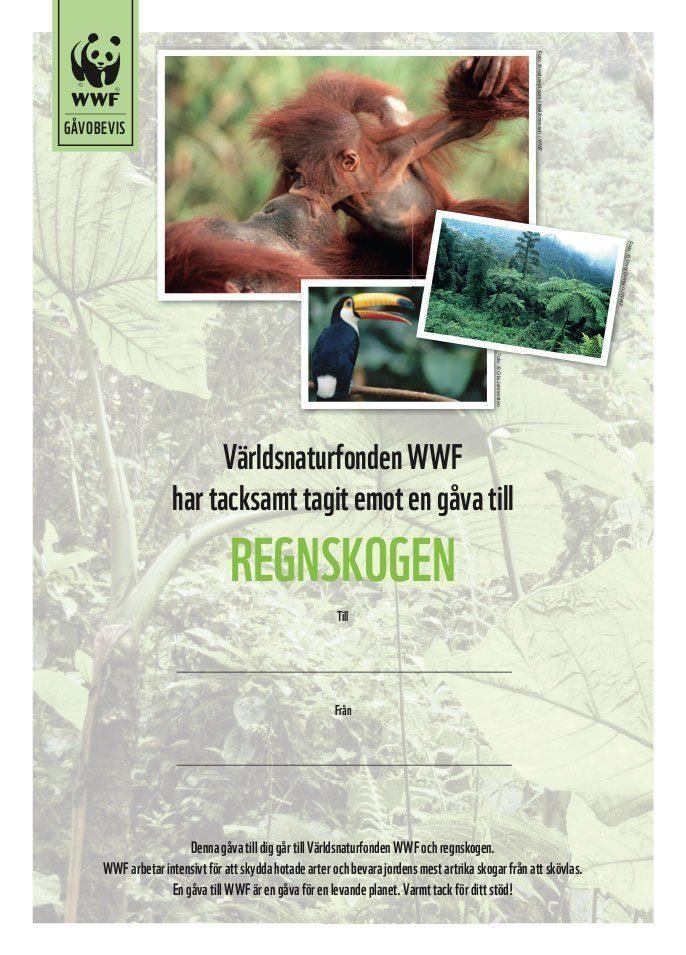 WWF Gåvobevis Regnskogen