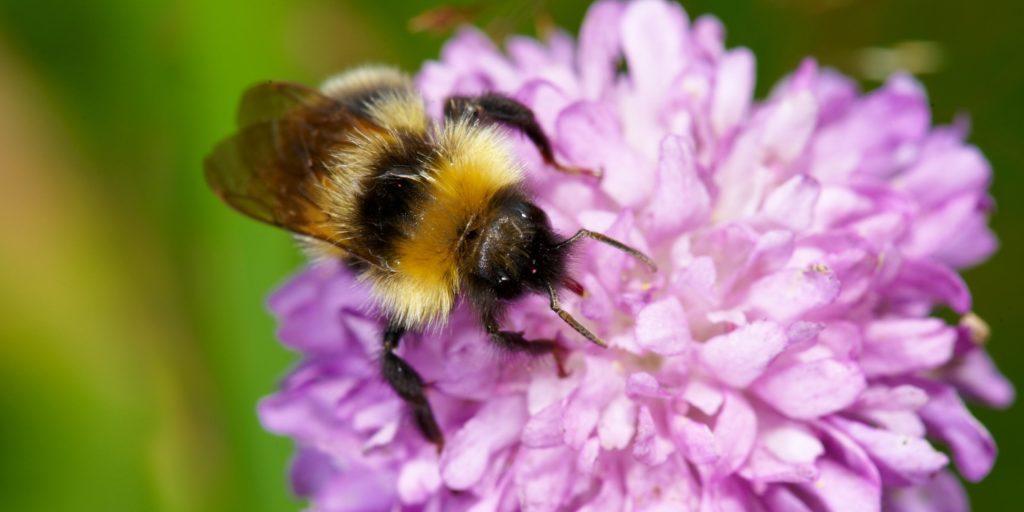 Hjälp bina och värna den biologiska mångfalden. Foto: Ola Jennersten
