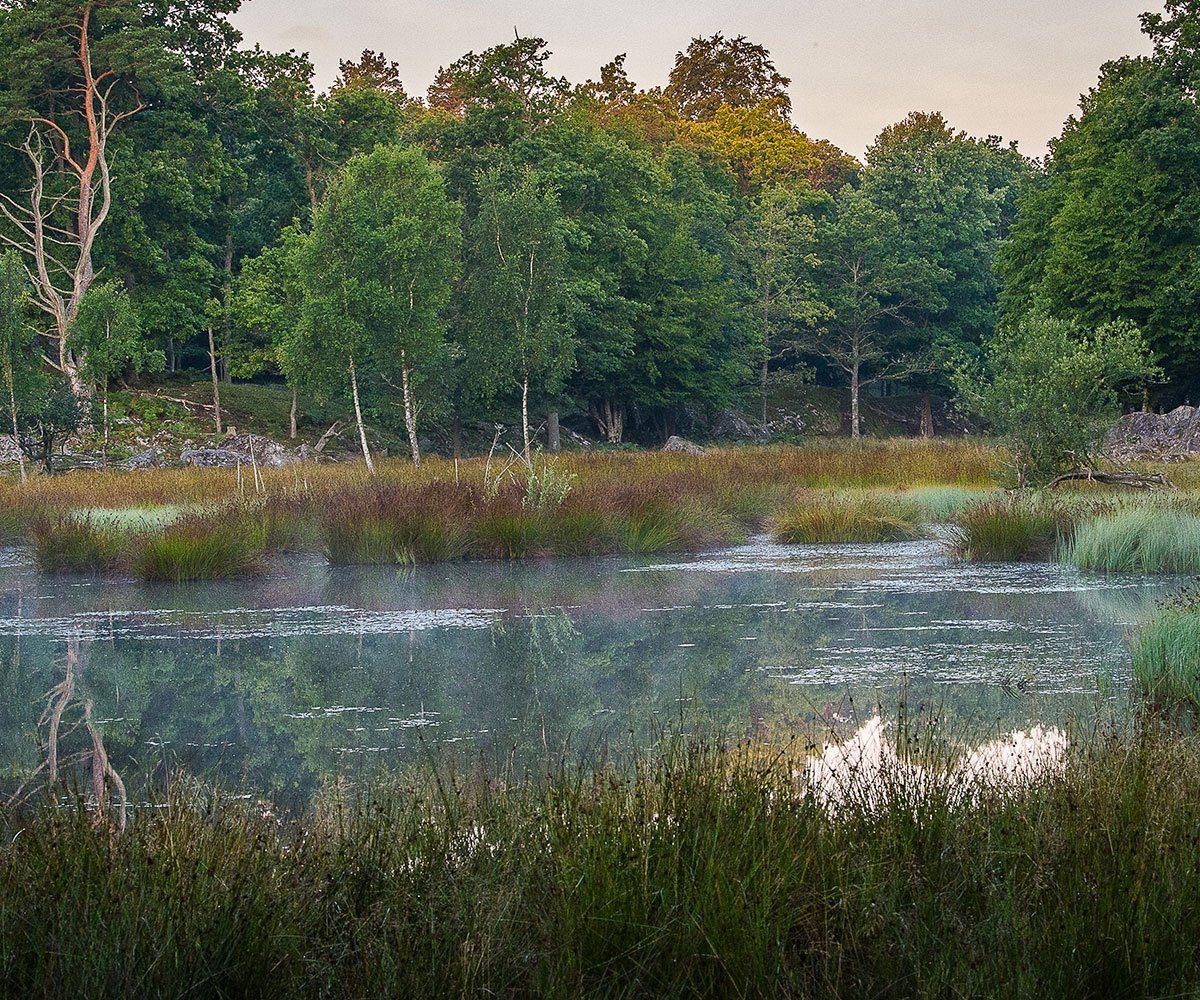 Våtmarkslandskap. Eriksbergs viltpark.