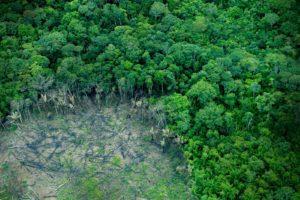 Skogsskövling i Bolivia