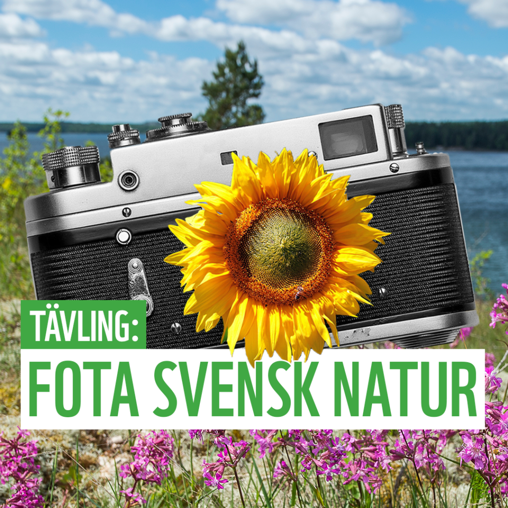 Fota svensk natur